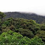 Blick von einem Mirador über den Primärurwald.