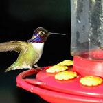 Die Kolibries faszinieren uns.