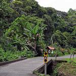 Es sind 8 km zwischen dem Strand von Punta Uva und Puerto Viejo. Die Pflanzenwelt entlang der Straße ist tropisch üppig.