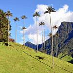 Dabei sind die Palmen in ihrer grazilen Höhe wunderschön.