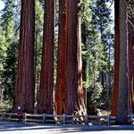 Riesenbäume begucken.