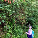 Wanderung entlang des Innenkraters. Marion bewundert natürlich jede Blüte.