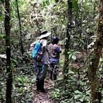 Die Urwaldwanderungen dagegen sind bedeutend anstrengender und wegen den oft matschigen Wegen nur in Gummistiefel machbar.