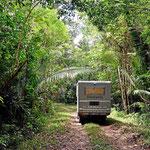 Fahrt durch den Urwald zur Mayastadt La Milpa.