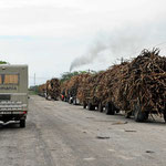 Die Wagen sind voll beladen mit Zuckerrohr, hinten qualmt die Zuckerfabrik.