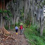 Überall stehen die Chamburo-Bäume.