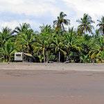 Unser Stellplatz vor den Palmen.