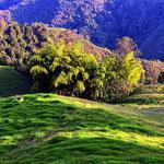 Ein Bambushain im Tal.