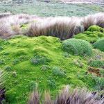 Landschaft mit dicken Mooskissen, leider regnet es und der Wind pfeift, so dass wir gleich wieder ins Womo flüchten.