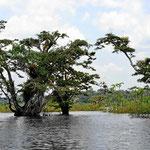 Es ist eine faszinierende Wasserlandschaft, durch die man mit dem Boot fährt.