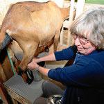 Marion melkt zum ersten mal in ihrem Leben Ziegen (bei Familie Schuffert).