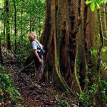 Zumindest einige der Bäume sind alt. Laut Eigenwerbung der Finca soll es ein Primärurwald sein, so recht glaube ich das aber nocht.