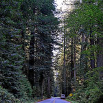 Ein Zwergen-Womo im Riesenwald.