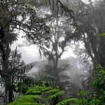 Wir sind im Nebelwald, kaum zu verkennen.