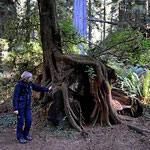 Aus alt mach neu - Redwood auf Redwood.