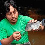 Bei einem Wettangeln gewinnt unser Guide Rom und fängt einen (kleinen) Piranha. Er kan sehr lang an Luft überleben und wenn man ihm ein Stück Blatt an den Mund hält, beginnt er sofort zu fressen.
