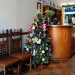 Und immer wider  bewundern wir die kolumbianischen Weihnachtsbäume.