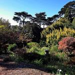 Im botanischen Garten des Golden Gate Parks.