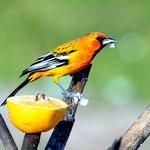 """Unser """"Vogelparadies""""."""