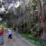 Vogelexkursion zwischen Chamburo-Bäumen.