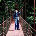 Auf der Hängebrücke über dem Urwald.