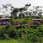 Eine Urwaldfarm. Wir verlassen Amazonien mit einem etwas wehem Herzen. Vielleicht werden wir in Peru nochmal in den Urwald fahren.