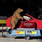 Eine drastische Warnung vor dem Bären. 13 mal sind sie in diesem Jahr schon in Autos eingebrochen.