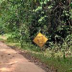 Hier gibt es zwar 50 Jaguare, so ganz ernst nehmen wir dieses Schild aber nicht.