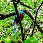 Und weil es so schön ist, nochmal ein Bild vom Quetzal.
