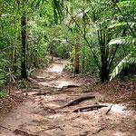 Man kann in Tikal herrliche Urwaldwanderungen unternehmen.