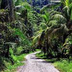 Der Weg zu einem Strand.