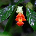 Die kleinen Pflanzen des Urwaldes. Leider ist es ziemlich duster und ich muss die Bilder mit 3000 Asa machen.