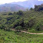 Urwaldlandschaft um Semuc Champay.