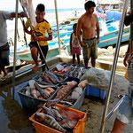 Die Auswahl ist groß, alles von örtlichen Fischern in Minibooten.