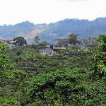 Die Gegend um Coban ist altes Kaffeeanbauland.