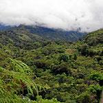 Wanderung durch das Tal entlang des Rio General.