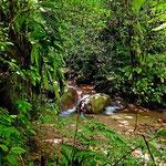 Um die Lodge herum gibt es mehrere sehr gut ausgebaute Wanderwege durch den Urwald. Dies kosten wir natürlich aus.