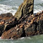 Auf dem Weg nach Trinidad kann man (mal wieder) Seelöwen bewundern.