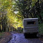 Abfahrt durch den Herbstwald.