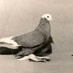 Голубь отца - Чехлатова Николая Алексеевича