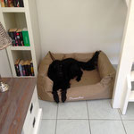 The dog's bed (f.ex. with a retriever)