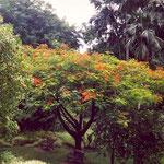 Im botanischen Garten in Victoria