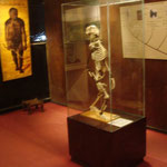 """""""Lucy"""" (140 cm) im National Museum von Addis Abeba"""
