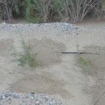 Tröpfchenbewässerung Taklamakan-Wüste