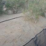 Taklamakan-Wüste Verwehungsschutz