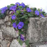 mur Freixo