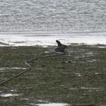 Orca torrlagd i Itaparica