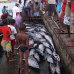 Tonfiskfångst
