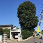 住宅に隣接した樹木の撤去