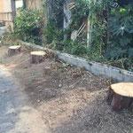 伐採工事後の様子